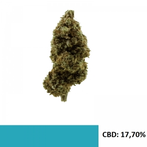 Susz CBD White Widow 17% CBD 1gr